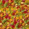 落ち葉のじゅうたんが手軽に描ける!無料のベクター紅葉リーフ背景素材(EPS)