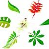 トロピカルな花や葉っぱのイラスト素材(AI)