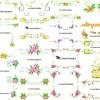 フリーベクター素材『 お花の飾り罫 』②