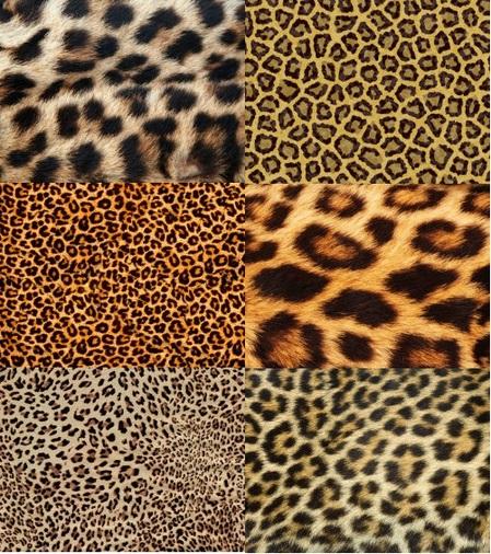 Leopard_HD_Image-thumb-450x506-2437