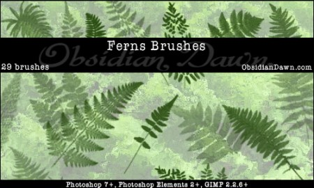 Ferns_Photoshop_Brushes_by_redheadstock-450x270