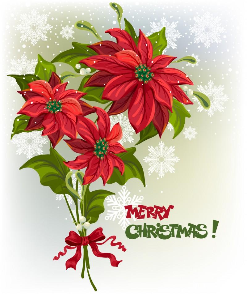 Пуансеттия как сохранить и размножить рождественскую звезду