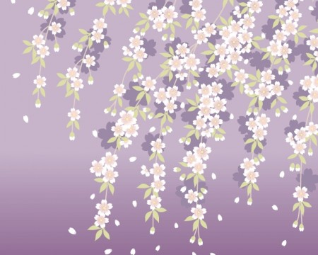 Japanese cherry blossom background