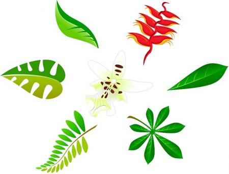 Leaves01-450x342