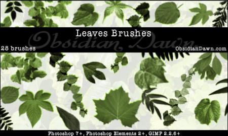 Leaves_Photoshop_Brushes