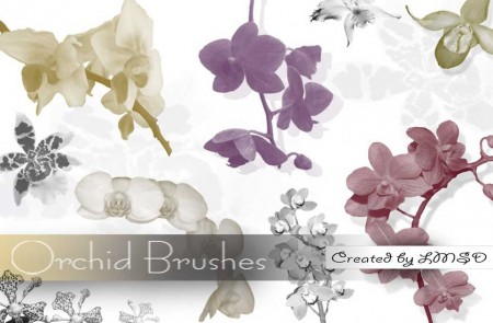 Orchid-Brushes-by-LMSD-450x295