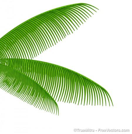 Palm-Tree-Leaves