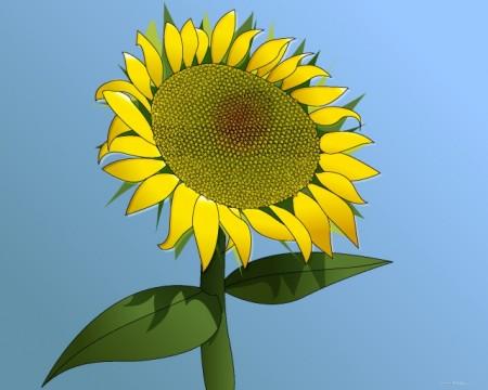 Sunflower___Girasol_by_raspete-450x360
