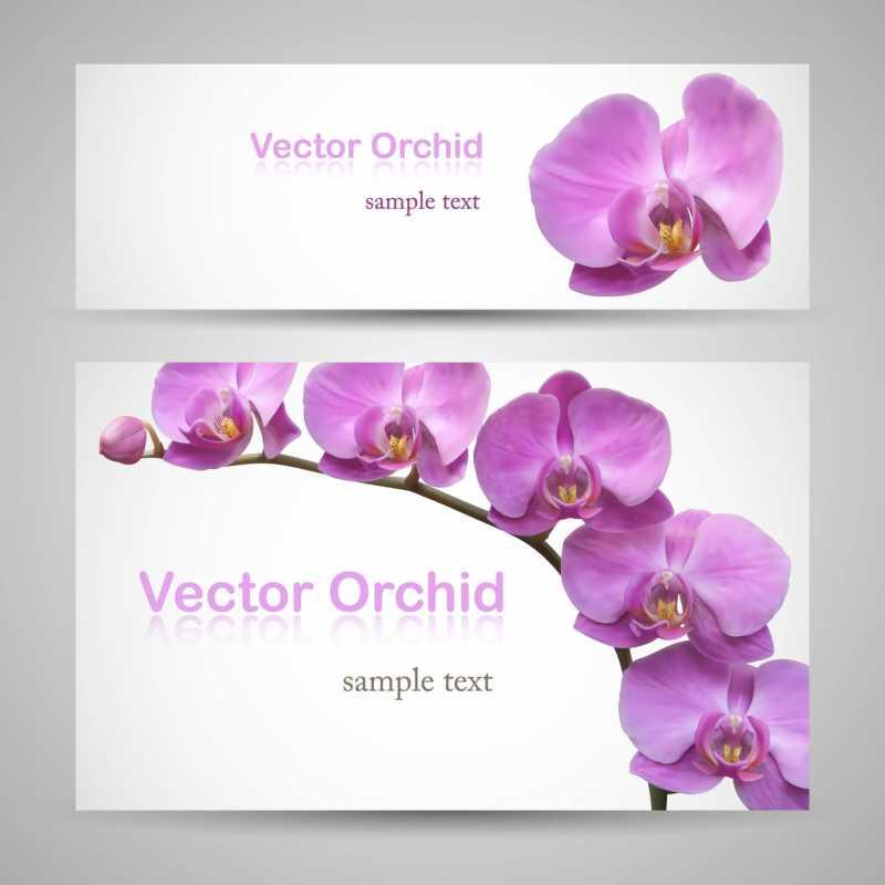 高品位胡蝶蘭など華やかなお花の無料ベクターイラスト素材2seteps