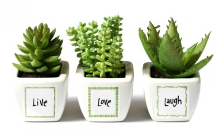 WL-CH-Square-Label-Plants