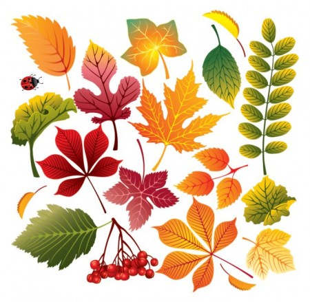 autumn-vector-leaves-450x439